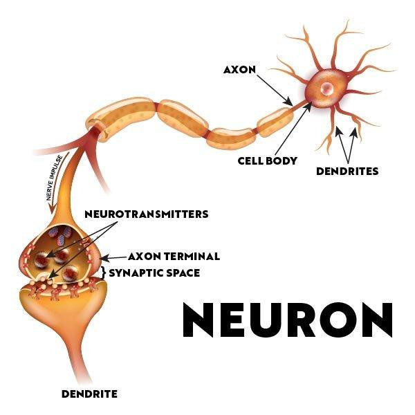 Illustration of brain neuron showing how synapses work